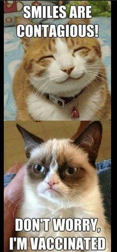 tard the grumpy cat no | Haha tard the grumpy cat | That angry cat