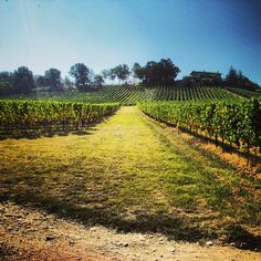 "Voglia di primavera. #primavera #spring #springtime #franciacorta #vigneti #vineyards #vine #green #verde #nature #natura #vino #brescia #bluesky #sky #blue #instawine #instanature #instapic #picoftheday #hot #warm #goodweather #weather"""