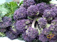 19 Frost Hardy Vegetables to Plant this Fall Broccoli Raab, Growing Winter Vegetables, Small Japanese Garden, Winter Crops, Edible Garden, Garden Fun, Garden Tips, Grow Organic, Plants