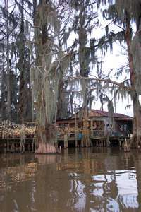 Beautiful, Louisiana Bayou living