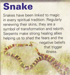 Snake spiritual guide another animal I fear but am thanking for being my Shadow Animal and helping deal and heal Thank you ♡