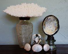 Soldered Table Coral on Vintage Vase by sharlenekaynedesigns, $88.00