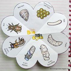 Honey Bee Life Cycle Activity, Foldable Science Interactive Notebook Craftivity Honey Bee Life Cycle Book, Science Interactive Notebook Cr This. Honey Bee Life Cycle, Bee Crafts For Kids, Life Cycle Craft, Bee Activities, Science Crafts, Interactive Notebooks, Interactive Learning, Life Cycles, Bee Keeping