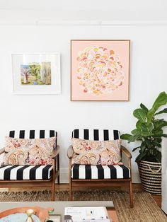 mid century modern chairs + black and white stripes cushions + fiddle fig tree