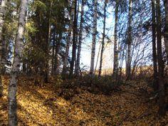 Прозрачен лес и красками одетый один, безмолвно ожидает холода. Россия. Республика Коми. Ухта