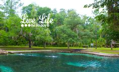 Juniper Springs is a subtropical paradise located in the middle of the Ocala National Forest. The water temperature of the crystal clear water is 72 degrees year round.