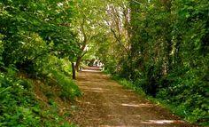 The Hayling Billy Trail, Photo of Havant - IgoUgo