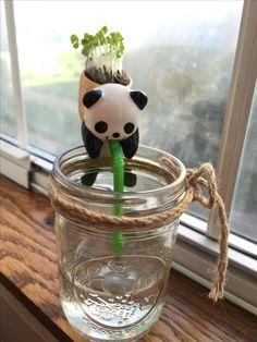 Panda chuppón😙🐼1semana