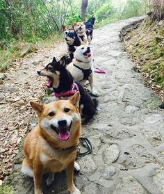 line of dogs   http://ift.tt/2nZZeXw via /r/dogpictures http://ift.tt/2ntIunH  #lovabledogsaroundtheworld