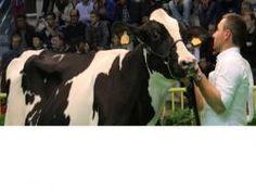 CremonaFiere: già al lavoro per rendere la Fiera del Bovino da Latte ancora più internazionale