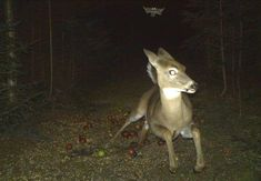 These Spooky Trail Cam Photos Will Send Shivers Down Your Spine | Gear Junkie