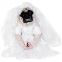 """¿De verdad alguien se sentiría capaz de no dar el """"Sí, quiero"""" a una criaturita con una cara como esta? Ponle a tu perro este disfraz de novia y que siente la cabeza de una vez."""