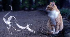 cat  statement: 남이 찍은 사진에 합성 (출처: catanimals)