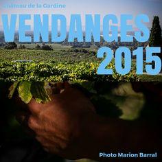 """Ça y est nous venons de commencer le """"bal des #vendanges"""" en douceur sur notre jeune plantier de Roussanne, qui nous offre sa première récolte ! ------------------ That's it, we have just started the #harvest gently on our young Roussane vineyard, that is giving us its very first production!  Photos Marion Barral"""