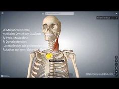 M.sternocleidomastoideus - YouTube Pandora, Youtube, Anatomy, Youtubers, Youtube Movies