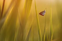 Butterfly in first sunlight - Photography Composition Wildlife Photography, Animal Photography, Photography Tips, New Wallpaper Download, Os Wallpaper, Photo Composition, Photography Composition, Butterfly Images, Rule Of Thirds