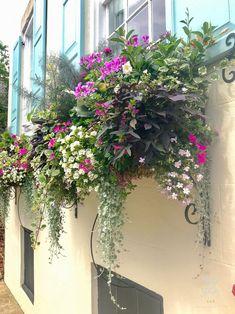 best summer flowers on balcony – Vyhľadávanie Google Diy Flower Boxes, Window Box Flowers, Window Boxes, Wood Planter Box, Raised Planter, Container Plants, Container Gardening, Flower Containers, Above Ground Garden
