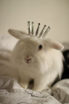 You Have an Audience with Queen Bunny!