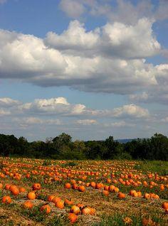 great pumpkin patch, North Alabama