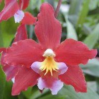 Assortiment Orchideeën
