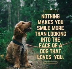 Dog Drawing Step By Step - Dog Art Golden Retriever - - - - Love My Dog, Puppy Love, Funny Dogs, Funny Animals, Cute Animals, Canis, Dog Quotes Love, Quotes About Dogs, Quotes About Animals