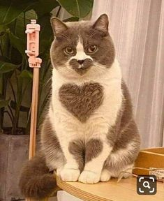 Any cats and kitten that are cute. See more ideas about Cute cats, Cute kittens Tags: Cute Baby Cats, Cute Cats And Kittens, Cute Little Animals, Cute Funny Animals, Funny Cats, White Kittens, Cute Pets, Cutest Kittens Ever, Super Cute Cats