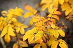 Fotografie + Gedicht - Herbstmagie