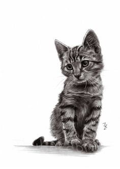 Cat pencil drawing art PRINT of pencil by DrawingIllustration