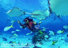 The snorkeling and diving in Koh Samui and neighbouring Koh Tao and Koh Phangan is world class. Ile St Martin, Snorkeling, Image Surf, Seychelles Islands, Best Scuba Diving, Sharm El Sheikh, Koh Samui, Koh Tao, Underwater World