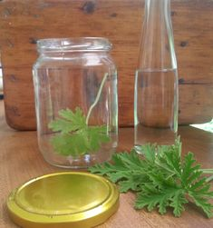 Οικολογικό εντομοαπωθητικό με αρμπαρόριζα | tsougrana.eu Mason Jars, Glass Vase, Remedies, Entertaining, Tips, Housekeeping, Home Decor, Health, Decoration Home