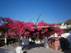 Santorini, Caveland Hostel