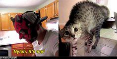 Darth Maul And His Cat