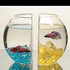 Betta bowl bookends . Betta obsessed now