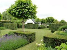 arbre-petit-jardin-Catalpa-Caroline-Catalpa-bignonioides-nana