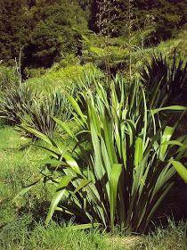goosepark: flax blog