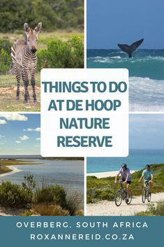 Planning a visit to the De Hoop Nature Reserve in the Overberg? Find out about De Hoop Nature Reserve accommodation as well as lots of things to do. Think game viewing, guided nature drive, an interpretive marine walk, a hike to a viewing platform at Potberg to see Cape vultures, eco-boating cruise on the vlei, whale-watching, the Whale Trail, hiking, mountain biking, birding, stargazing and the De Hoop Fig Tree restaurant. National Parks Map, National Park Posters, East Africa, North Africa, Africa Destinations, Travel Destinations, Travel Ideas, Travel Tips, Mountain Zebra