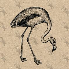 Retro drawing bird Flamingo vintage Instant Download Digital printable Black and White clipart graphic scrapbooking burlap kraft totes etc by UnoPrint on Etsy
