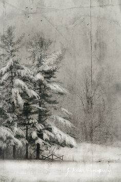 The Thick Of Winter~ Jamie Heiden Snow Scenes, Winter Scenes, Landscape Photography, Art Photography, Winter Wonder, Winter Art, Winter Landscape, Painting Inspiration, Painting & Drawing