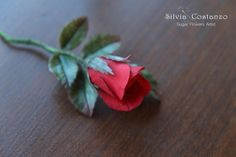 Red passion by Silvia Costanzo