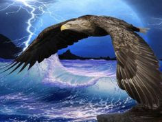 All types of eagle birds in the world with amazing facts. Bald eagles are symbol of American. They are at the top of the food chain, with some species feeding on big prey like monkeys and sloths. Eagle Images, Eagle Pictures, Bird Pictures, Eagle Wallpaper, Wallpaper Backgrounds, Eagle Art, Prophetic Art, Fauna, Beautiful Birds