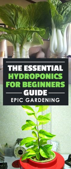 A series on for beginners - learn the science behind hydroponics and how to build your own homemade hydroponic systems! garden vegetable hydroponic systems Hydroponics for Beginners Guide: How to Get Started Growing Aquaponics System, Hydroponic Farming, Hydroponic Growing, Aquaponics Plants, Growing Plants, Hydroponic Vegetables, Growing Veggies, Gardening Vegetables, Indoor Vegetable Gardening