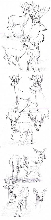 Drawing Animals Deer Character Design References 17 New Ideas Animal Sketches, Animal Drawings, Drawing Sketches, Pencil Drawings, Art Drawings, Drawing Animals, Sketching, Drawing Tips, Drawing Ideas
