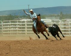 Rodeo is Wyoming's State sport