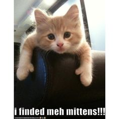 Lolcats 'n' Funny Pictures of Cats - I Can Has Cheezburger? - Page 4 ❤ liked on Polyvore