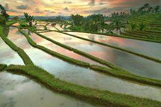 Az indonéz szigetvilág közepén elhelyezkedő Bali évtizedek óta az európai turisták kedvelt ázsiai célpontja. Bár a nyaralók évről évre egyre többen özönlenek a szigetre, Bali varázsa és spirituális energiája még mindig tapintható. Az istenek szigetének lakossága 93%-ban…