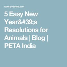 5 Easy New Year's Resolutions for Animals   Blog   PETA India
