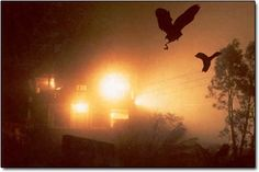 """The  quiet and obscure village of Jatinga in Assam, northeastern India is abuzz with birds during the monsoon season. Many of them  practically fall from the sky, smashing themselves to death in the streets of Jatinga. The """"suicides"""" always occur between 7 and 10 p.m. and only around a specific mile-long, 200-yard-wide strip of land. The process has gone on like clockwork for roughly the past 100 years. 44 species of migratory birds have been identified as part of the phenomenon."""