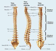 Vamos entender nossa coluna vertebral e sua correlação com o nosso emocional:     COLUNA CERVICAL   Representa a flexibilidade e a capacidad...