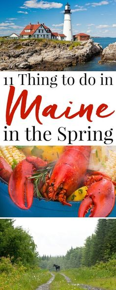 These 11 Things to do in Maine in the Spring will have you getting the most out of an off-season visit to the Pine Tree State! break ideas east coast 11 Things to do in Maine in the Spring Spring Vacation, Vacation Trips, Vacation Spots, Vacation Ideas, Places To Travel, Travel Destinations, Places To Visit, Holiday Destinations, Visit Maine