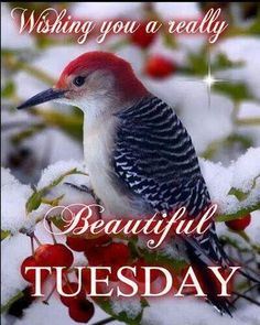 568 Best Tuesday Blessings images in 2019 | Tuesday quotes ...
